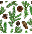 realistic green fir tree branches and cones vector image