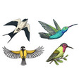 small birds paradise barn swallow or martlet vector image vector image