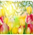 Beautiful tulips in spring time EPS 10 vector image