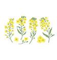 bundle elegant botanical drawings blooming vector image vector image