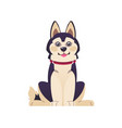 cartoon dog happy puppy in red collar isolated vector image vector image