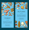 hand drawn mushrooms vector image