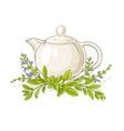 sage tea vector image