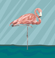 FlamingoStand17 vector image vector image