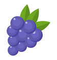 grapes icon flat style vector image vector image