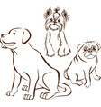 set dogs breeds vector image
