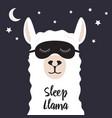 sleeping llama vector image