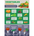 Vegetables Infographic Set vector image vector image