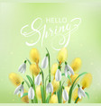 hello spring card with snowdrops and willow vector image vector image