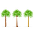 palm tree 28 vector image vector image
