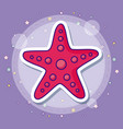 sea star design vector image vector image