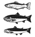 set of trout fish isolated on white background vector image vector image