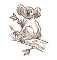 australian symbol koala bear on tree branch vector image