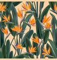 crane flower pattern strelitzia floral wallpaper vector image
