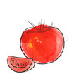 drawing tomato vector image
