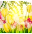 Fresh blooming tulips in the spring garden EPS 10 vector image