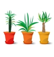 three pots with plants vector image vector image
