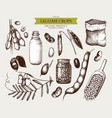 vintage set of legumes on white vector image vector image