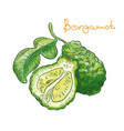 bergamot fruit on a white background vector image