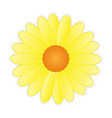 Cute sunflower on white background vector image