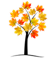 maple tree autumn leafvector vector image vector image