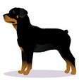 rottweiler dog vector image vector image