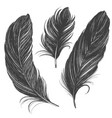black feathers set hand drawn vector image