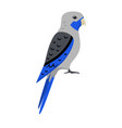 blue rosella parrot icon in flat style vector image