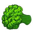 broccoli icon cartoon style vector image