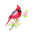 hand painted watercolor christmas bird vector image