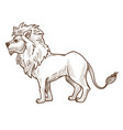 wild cat lion isolated sketch african fauna vector image