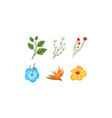 plants and flowers collection design elements for vector image vector image