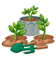 plants and gardening equipments vector image vector image