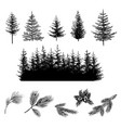 set onifer trees silhouettes on white vector image