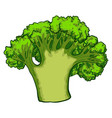green broccoli icon cartoon style vector image