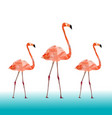 low poly colorful flamingo bird on blue vector image vector image