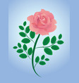 pink rose with leaves vector image