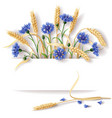 cornflower and ears banner vector image vector image