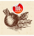 Hand drawn sketch vegetable beet Eco food vector image vector image