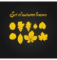 Hello autumn leaves vector image vector image