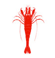 red shrimp logo isolated on white background vector image vector image