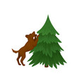 brown dog standing on hind legs near green vector image vector image