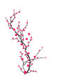 cherry blossom for chinese new year and mid vector image vector image