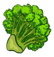 fresh broccoli icon cartoon style vector image vector image