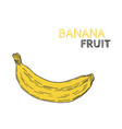 hand drawn banana fruit isolated on white vector image vector image