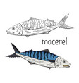 hand drawn tuna fish black and white and color vector image