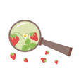 strawberry under the magnifying isolated vector image