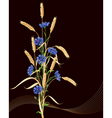 cornflowers and wheat ears on black vector image vector image