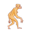 cute brown monkey walking in straight vector image