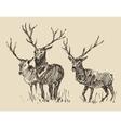 Deers Engraving Vintage Sketch vector image vector image